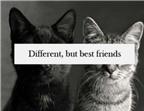 10 kiểu bạn bè... tốt nhất bạn nên tránh xa