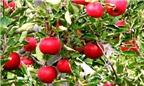 5 loại quả màu đỏ giúp giảm béo hiệu quả