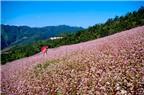 7 điều phải thử khi du lịch Hà Giang mùa thu này