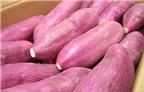 Ăn khoai lang giảm nguy cơ ung thư vú