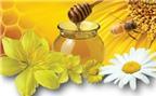 Bài thuốc dân gian trị ho bằng hoa