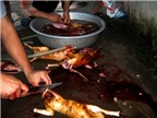 Bật mí cách làm thịt mèo và chế biến món ăn từ thịt mèo