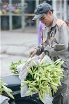 Bí quyết chọn mua và cách giữ hoa loa kèn tươi lâu