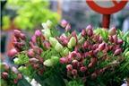 Bí quyết phân biệt hoa sen và hoa quỳ để tránh nhầm lẫn