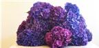 Cách cắm hoa đẹp, đơn giản chỉ 15 phút với 3 mẫu hoa