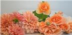 Cách cắm hoa thược dược và hoa hồng để bàn đẹp