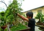 Cách chăm sóc Bonsai để giữ thế cây đẹp theo thời gian