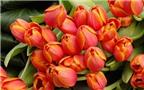 Cách giữ hoa tươi lâu trong ngày Tết Nguyên Đán