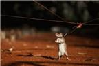 Cách làm bẫy chuột đơn giản mà hiệu quả ngay tại nhà