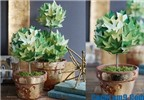 Cách làm cây xanh bằng giấy cực đẹp trang trí Tết