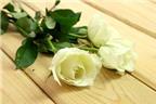 Cách làm hoa hồng bảy sắc cầu vồng tuyệt đẹp