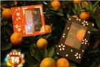 Các mẫu thiệp Tết phát sáng lung linh đón năm mới
