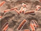 Chất carotenoid trong vi khuẩn đường ruột và chứng đột quỵ
