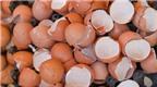 Công dụng của vỏ trứng không phải ai cũng biết