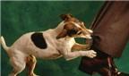 Đã tiêm ngừa bệnh dại lại bị chó cắn có nên tiêm phòng lại?