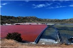 Đến thăm cánh đồng muối hồng rực ấn tượng