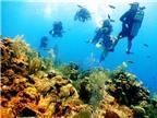 Đến thăm đảo Cayman và tận hưởng những trải nghiệm thú vị