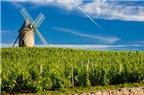 Đến thăm những vùng rượu nho nổi tiếng ở Pháp
