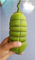 Dừa tạo hình đòn bánh tét siêu lạ gây sốt
