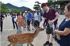 Du lịch Nhật Bản tham quan những 'công dân' hươu trên đảo Miyajima