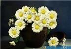 Hướng dẫn cách làm hoa cúc bằng giấy cực đơn giản và đẹp
