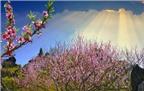 Khám phá những vùng đất có hoa đào đẹp nhất cả nước
