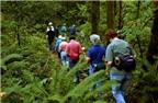 Kinh nghiệm du lịch rừng