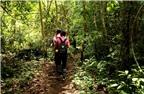 Kinh nghiệm du lịch rừng nhiệt đới