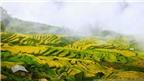 Kinh nghiệm 'săn mây' Y Tý - Lào Cai cho người mê xê dịch