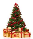 Kinh nghiệm thuê cây thông Noel