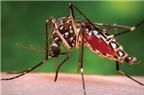 Làm sao để trị vết muỗi đốt?