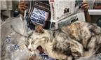 Linh vật giúp các cửa hàng Hong Kong buôn may bán đắt