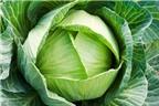Lợi ích chữa bệnh từ bắp cải