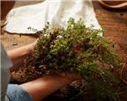 Mẹo trồng rau thơm tươi tốt trong nhà