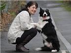Phát hiện ung thư nhờ thú cưng