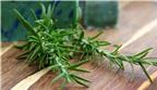 Phương pháp trồng cây hương thảo trong chậu tiện lợi