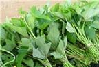 Phương pháp ươm trồng cây rau khoai lang