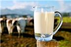 Sữa thô tiềm ẩn nhiều vi khuẩn dễ gây hại cho trẻ em