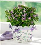 Sự tích và ý nghĩa của loài hoa violet tím ngọt ngào