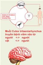 Viêm não và cách nhận biết để phòng tránh