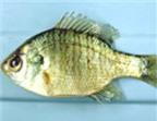 Hai cách giữ cá sống