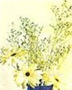 Cắm hoa cúc đồng tiền