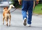 Nguy cơ tiềm ẩn khi dắt chó mèo đi dạo