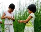 Những cách đơn giản dạy trẻ về thiên nhiên