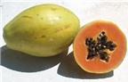 Loại trái cây nào tốt nhất cho cơ thể?