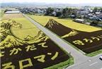 Độc đáo tranh trên cánh đồng
