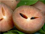 Lợi ích chữa bệnh của quả hồng xiêm