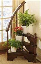 5 lưu ý khi chăm sóc cây cảnh trong nhà