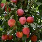3 loại quả không nên ăn nhiều trong mùa hè