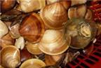 Vị thuốc, bài thuốc từ dư phẩm hải sản